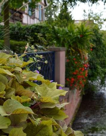 Balade entre toits et jardins - image