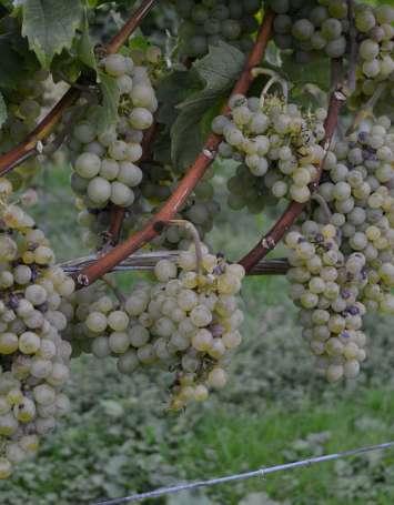 Transversale cyclo Nord-Sud : Vosges du Nord  - Véloroute du Vignoble d'Alsace - image