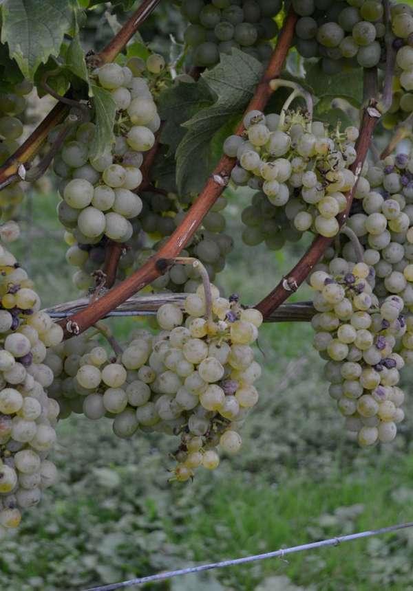 Transversale cyclo Nord-Sud : Vosges du Nord  - Véloroute du Vignoble d'Alsace