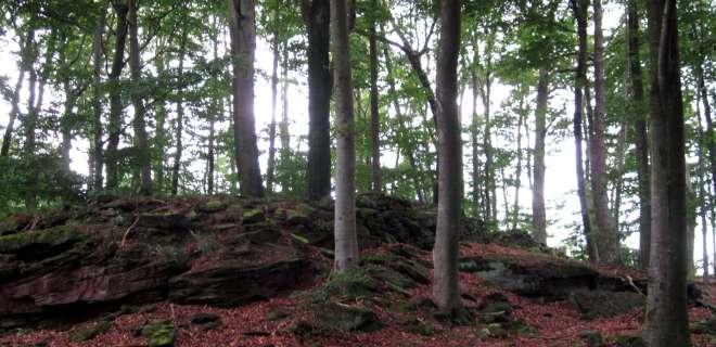 Circuit de randonnée vers le camp celtique- image