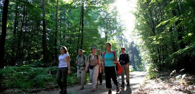 Spaziergang rund um den großen Wintersberg- image