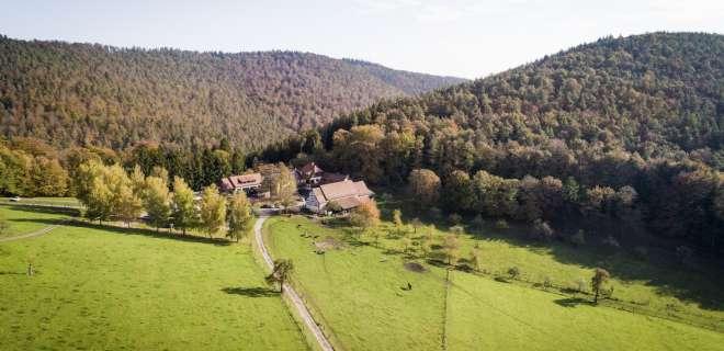Restaurant Gimbelhof- image