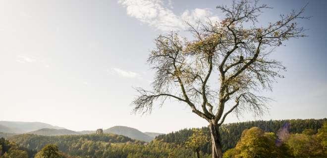 Route des châteaux forts et des forêts- image