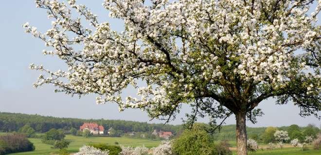 Promenade sous les arbres de Niederbronn-les-Bains- image