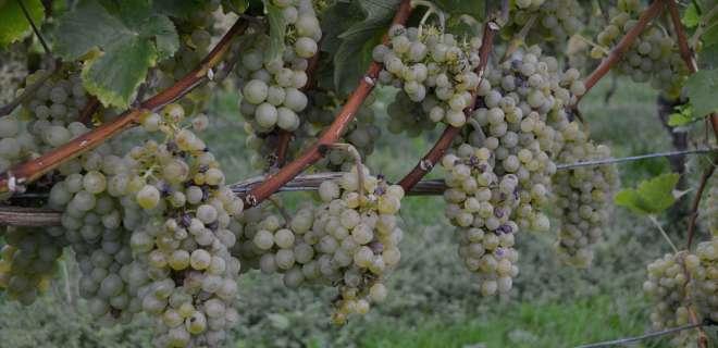 Transversale cyclo Nord-Sud : Vosges du Nord  - Véloroute du Vignoble d'Alsace- image
